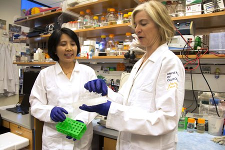 In this photo provided by UC Berkeley Public Affairs, taken June 20, 2014, Jennifer Doudna, right, and her lab manager, Kai Hong, work in her laboratory in Berkeley, Calif. (Cailey Cotner/UC Berkeley via AP)