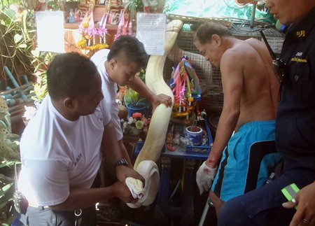 Rescue workers were eventually able to free Surin Chan-in from the tight grasp of his giant reticulated python.
