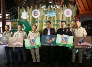 "The Director General of the Department Thanya Netidhammadul joined Deputy Governor Krit Thanawanich and Dr.Sarawut Srisakul, acting for Director of Pingkanakorn Development Agency (Public Organization) for the opening ceremony of ""The Future of Elephant is in Our Hands"" campaign at the Chiang Mai Night Safari on March 3 -5, 2016."