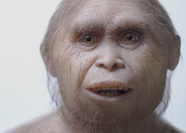 "This 2015 picture provided by Kinez Riza shows a reconstruction model of Homo floresiensis by Atelier Elisabeth Daynes at Sangiran Museum and the Early Man Site. In a paper released Wednesday, June 8, 2016, researchers say newly-discovered teeth and a jaw fragment, which are about 700,000 years old, have revealed ancestors of Homo floresiensis, also known as ""hobbits,"" our extinct, 3 1/2-foot-tall evolutionary cousins. (Kinez Riza via AP)"