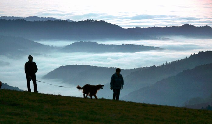 A man and a woman walk a dog along the Schauinsland Mountain near Freiburg, southern Germany, with fields of fog in the Rhine valley below. The long-debated question of where dogs first appeared has always been complex, and a new study suggests it may have two answers. (AP Photo/Winfried Rothermel)