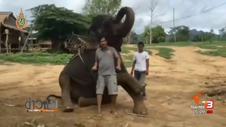 Baby elephant which saved a British schoolgirl from tsunami has been found