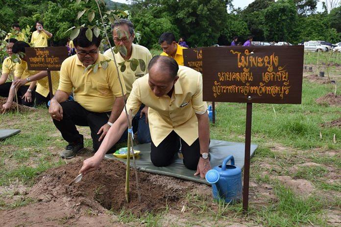 Chonburi Gov. Khomsan Ekachai helps plant one of 7,000 seedlings in HM the King's name at Khao Kheow Zoo's wildlife sanctuary on Khao Chompoo.