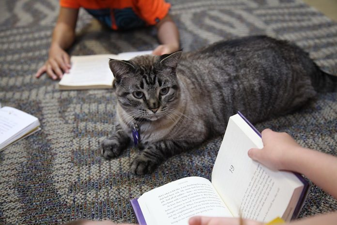 Browser the cat sits among a group of children being read to in the city's public library in White Settlement, Texas. (AP Photo/John L. Mone)