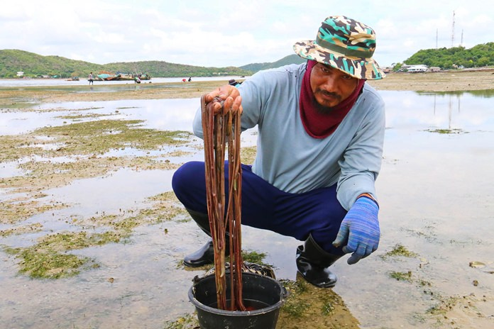 Maithree Pabchompu and his family (background) have been hunting marine blood worms for more than 10 years.