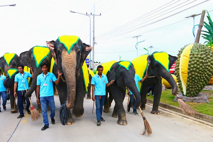 Elephants join the fun in cleaning up the streets leading to Nong Nooch Tropical Gardens.