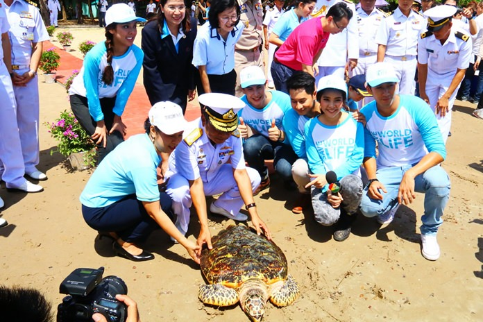 Among the turtles released was a 5-year-old green turtle breeder and a 10-year-old hawksbill sea turtle saved by the center
