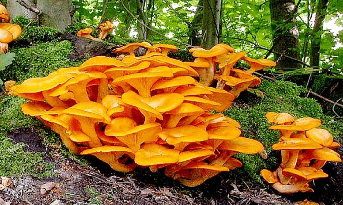 Seasonal mushrooms served at Acqua.