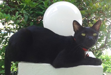 Blacky the cat.