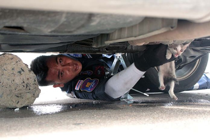 Sawang Boriboon Foundation officers help free a kitten stuck in a car's engine compartment.