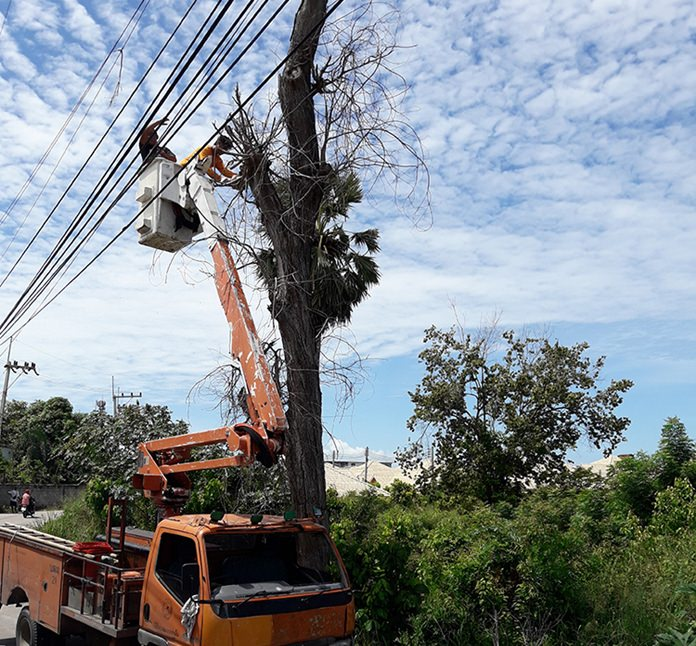 Workers from when the Provincial Electricity Authority sheared off the branches of a dead tree perilously hanging over power lines.