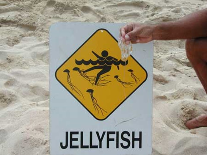 t19916-jelly