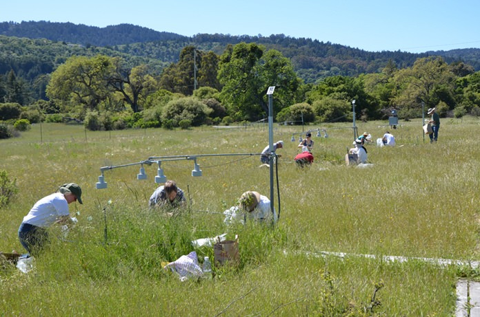 In this photo provided by Stanford University, participants in the Jasper Ridge Global Change Experiment sampled plots of the grassland ecosystem. For 17 years with experiments on more than one million plants, scientists put future global warming to a real world test, growing California flowers and grasslands with extra heat, carbon dioxide and nitrogen to simulate a not-so-distant future. The results contradict a common talking point by people who downplay the threat of global warming and reject the science. (Nona Chiariello/Stanford University via AP)