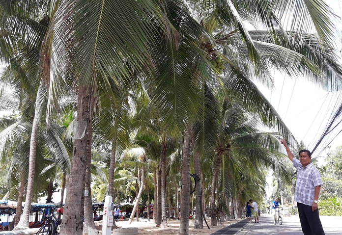 Manop Sakorn, chairman of We Love Free Zone Dongtan Beach Group, has complained to city hall about how trees are obscuring shoreline lighting.