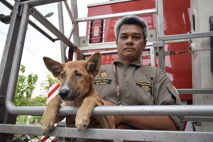 Disaster Prevention and Mitigation Department officer Yuttanan Fuangfoo and his partner used a basket truck to save a skinny dog stranded on the third-floor balcony of an abandoned building.