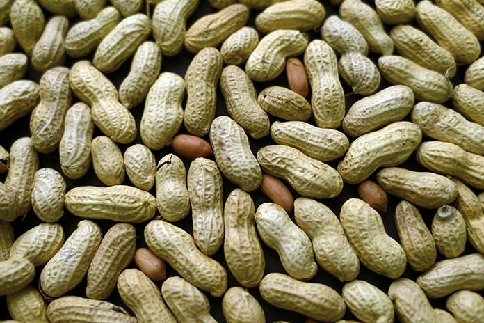 A study published Oct. 26, 2016, in the Journal of Allergy and Clinical Immunology says nearly half of those treated with a skin patch for peanut allergy sufferers were able to consume at least 10 times more peanut protein than they were able to consume prior to treatment. (AP Photo/Patrick Sison, File)