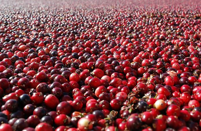 In a study published Thursday, Oct. 27, 2016 in the Journal of the American Medical Association, cranberry capsules didn't prevent or cure urinary infections in nursing home residents. The research adds to decades of conflicting evidence on whether cranberries in any form can prevent extremely common bacterial infections. (Mark Bugnaski/Kalamazoo Gazette - MLive Media Group via AP)
