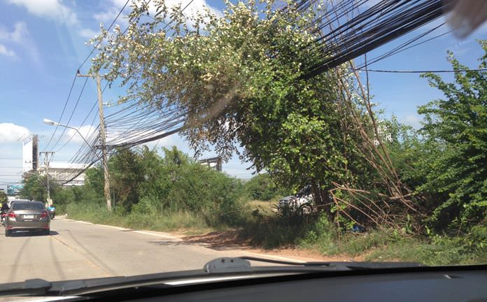 Residents fear that the overgrown bushes and trees can affect wires that run through Soi Khao Talo, which may result in a fire.