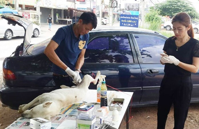 Public Health Department veterinarians were out in the Khao Talo Community to help control the stray dog population with free sterilizations.