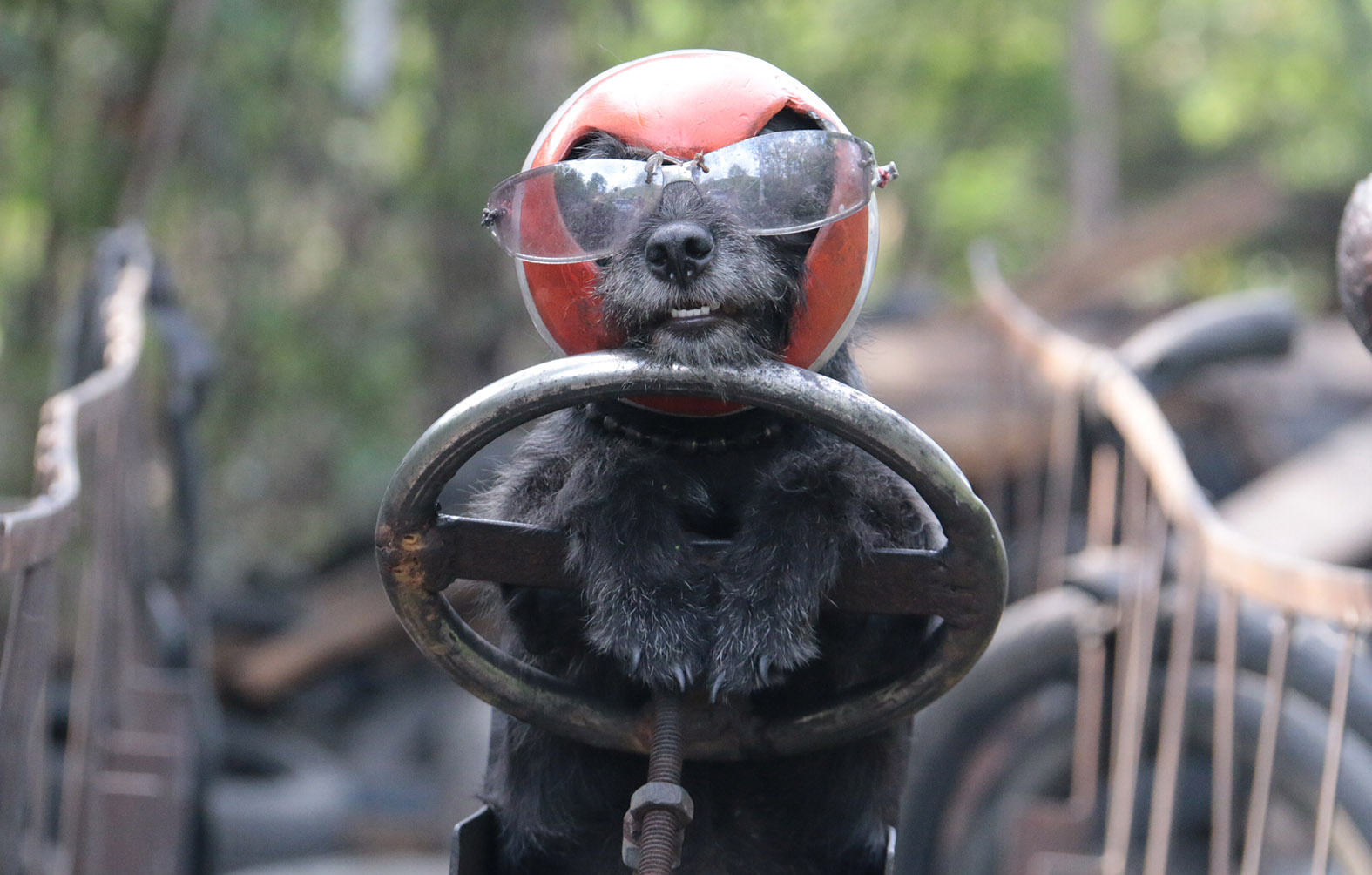 Nasan the poodle traded in his cap for a helmet when Sawang traded in his bicycle for a motorbike with sidecar and trailer.
