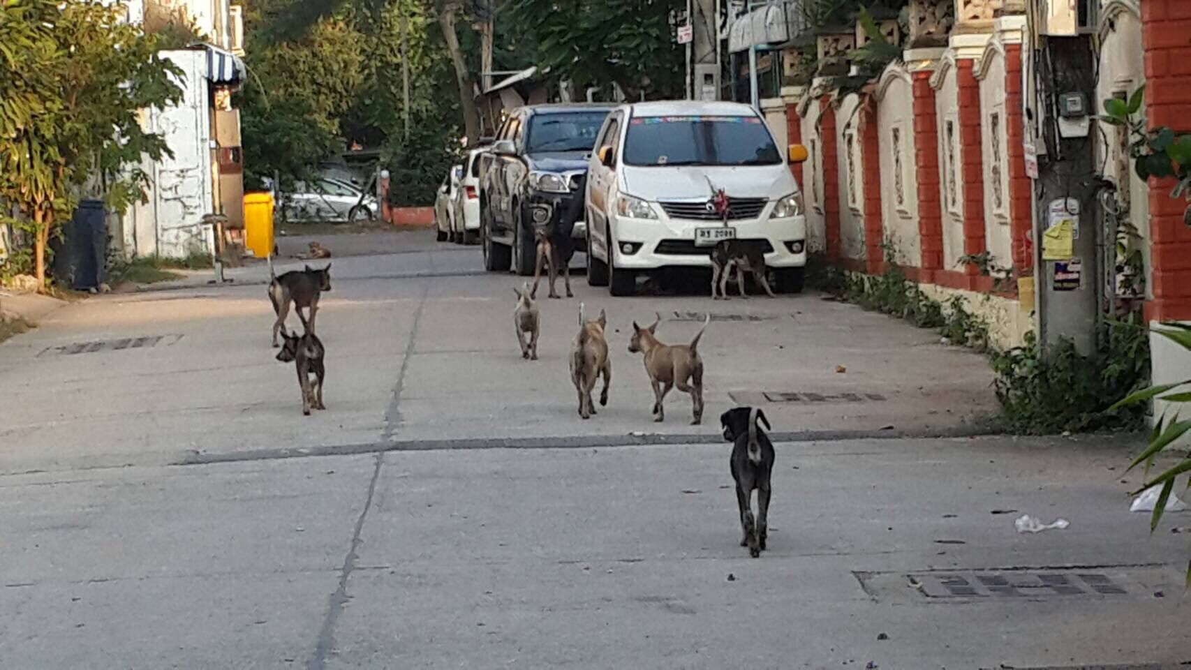 Central Pattaya residents are complaining about a pack of stray dogs that are biting, barking and pooping in their backyards.