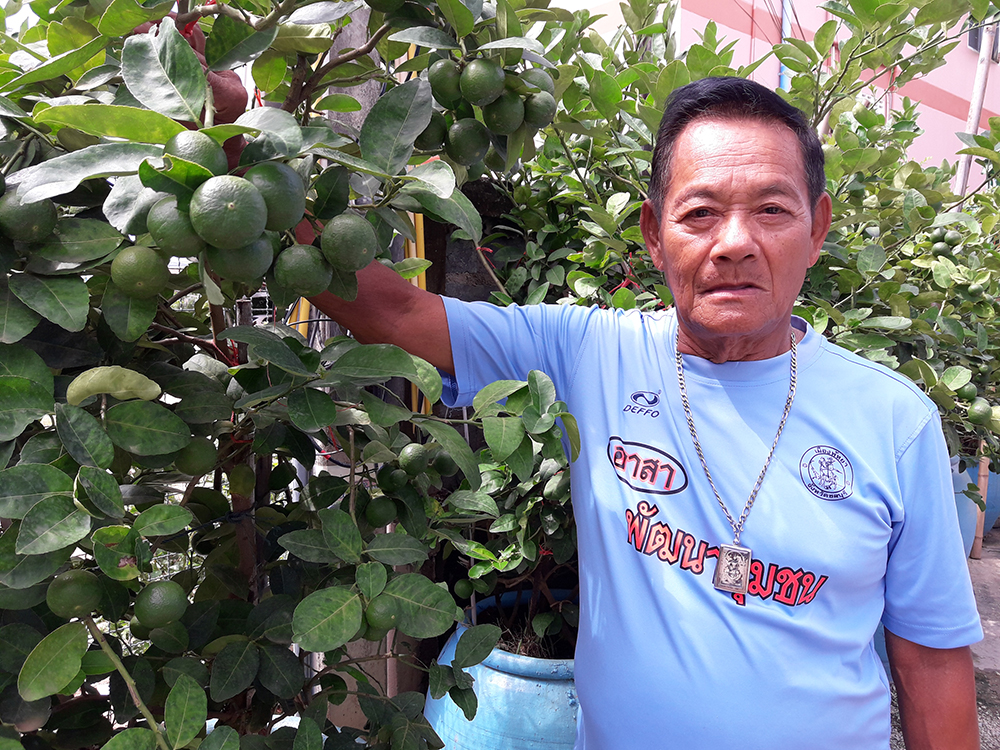 Community board member Jomnong Tiempool is teaching Kophai Community residents how to grow Pichit limes at home to earn extra money.