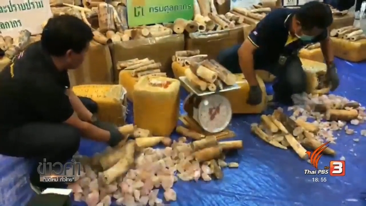 Thailand News 08-03-17 2 PBS Customs seized 17 million baht worth of African ivory 4