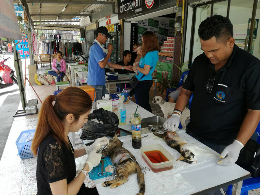 Pattaya continued its campaign to offer free rabies vaccinations and pet sterilizations, this time on Soi Bongkot.