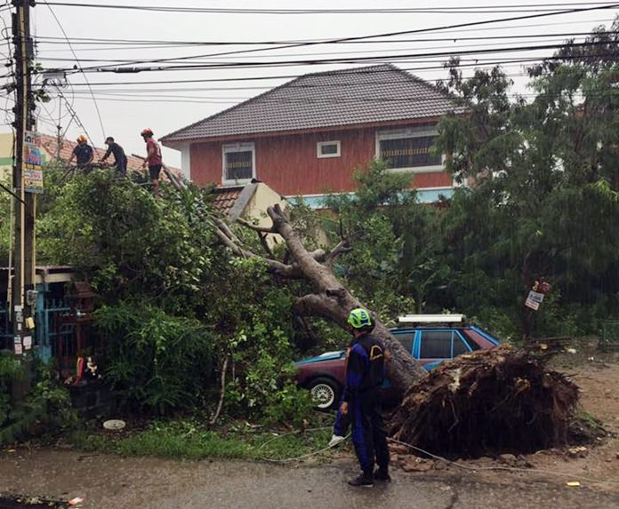 A massive tree brought down in a thunderstorm smashed cars and damaged homes, but injured no one on Soi Boonsampan 5 (off Soi Khai Noy).