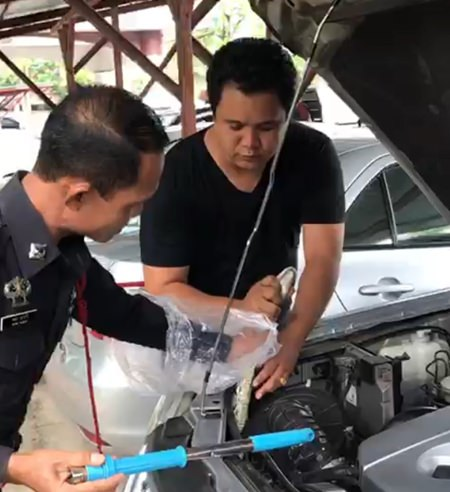 After opening the hood, Pol. Sr. Sgt. Maj. Amorn Nawari and coworkers found the head of a boa constrictor poking out of the engine compartment.