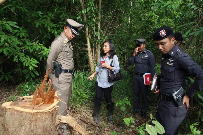 Kajita Montienvichienchai called police after poachers left behind only the stumps of two Siamese Rosewood trees on private property.