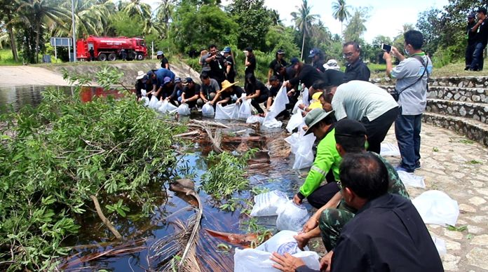 Banglamung District and Nong Plalai Sub-district released more than 20,000 fish to help revitalize the marine ecosystem.