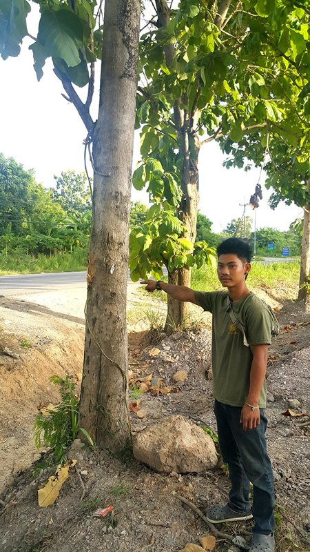 Oomchai Sritayae said he was headed to work with is family when he saw Som hanging from the tree. He climbed up and cut him down in time to save his life.