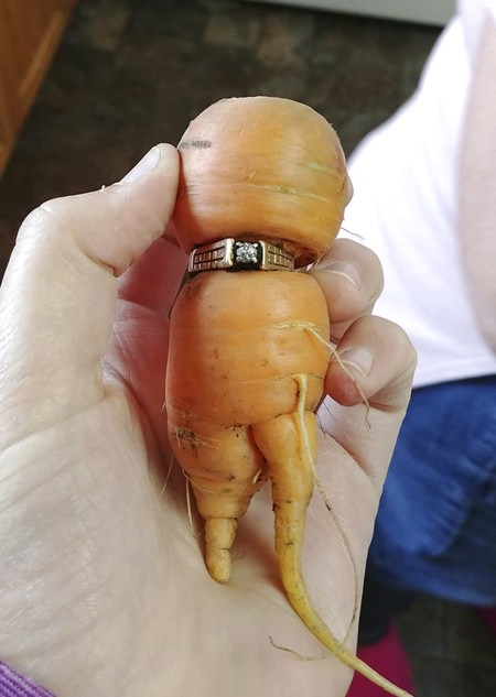In an undated photo provided by Iva Harberg, Mary Grams, 84, holds a carrot that grew through her engagement ring in Alberta, Canada.(Iva Harberg/The Canadian Press via AP)