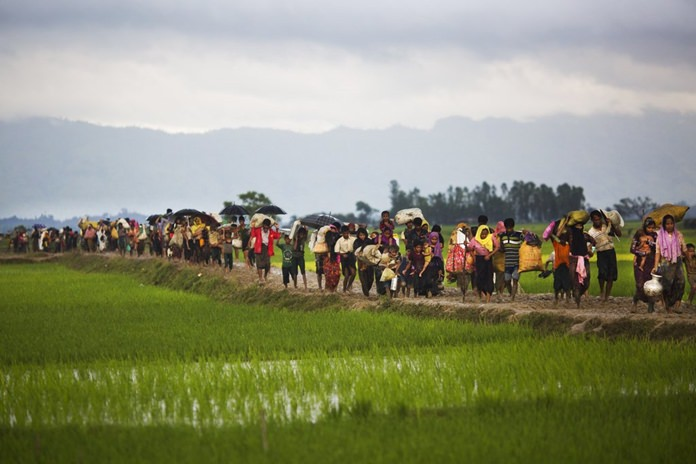 Myanmar's Rohingya ethnic minority members walk through rice fields after crossing over to the Bangladesh side of the border near Cox's Bazar's Teknaf area, Friday, Sept. 1, 2017. (AP Photo/Bernat Armangue)