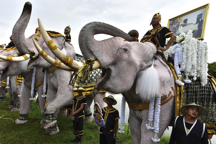 Elephants doused in powder to appear an auspicious white, stand to attention and trumpet at a ceremony to mark one year since His Majesty the late King Bhumibol Adulyadej's death Friday, Oct. 13, in the ancient royal capital Ayuttahya. (AP Photo)