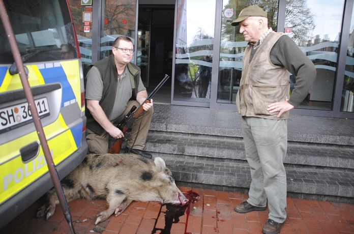 Hunter Uwe Ingwersen, left, and Horst Allwardt right look at a wild boar that was shot in the center of Heide, northern Germany on Friday, Oct. 20. (Helge Holmson/dpa via AP)