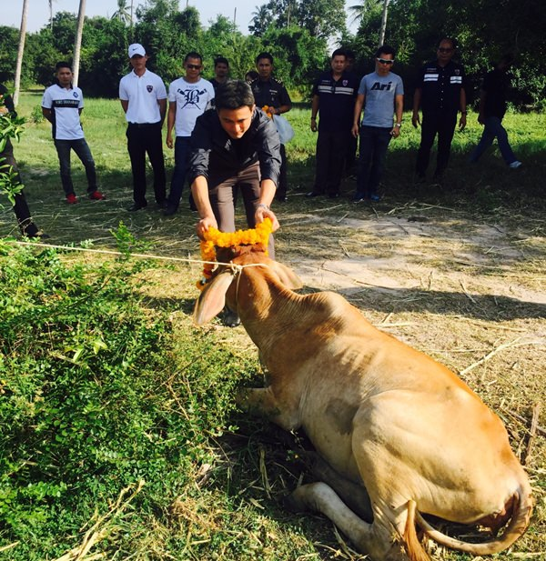 Pol. Col. Songpod Sirisuka and top deputies pardoned two cows on death row to make merit on behalf of his employees.