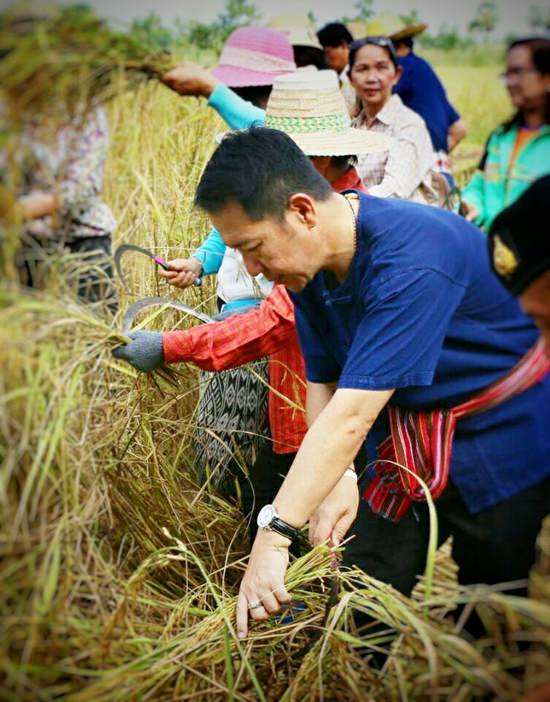 Nong Plalai residents plant rice as part of a community project to both preserve traditional customs and entice tourists to visit.