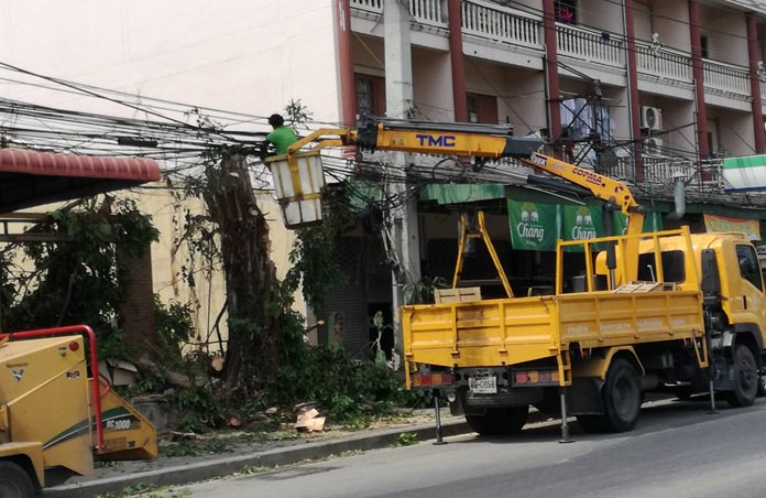 Pattaya workers prune trees on South Road to prevent power outages and fires.