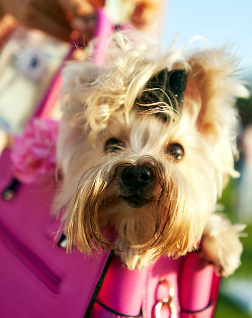 This pink pooch joined the spirit of the day.