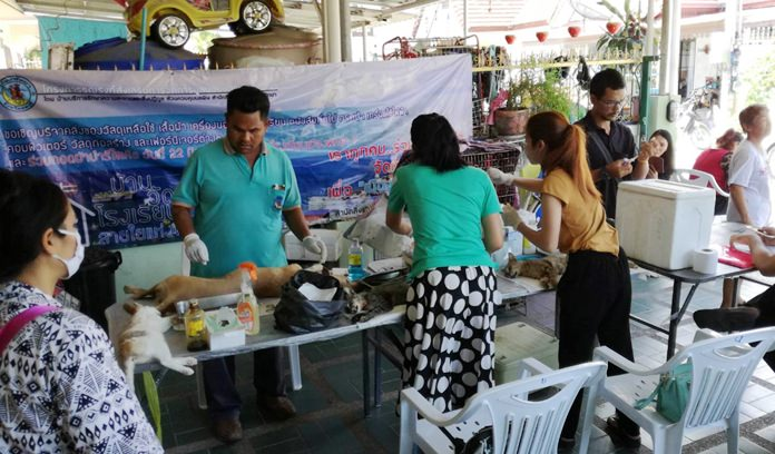 Marbpradu pets are given free medical care during the recent Public Health mobile veterinarian clinic.