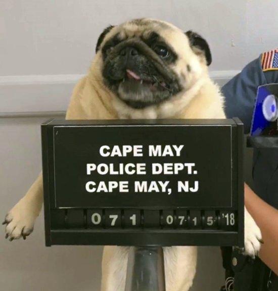 (Cape May N.J. Police Department via AP)