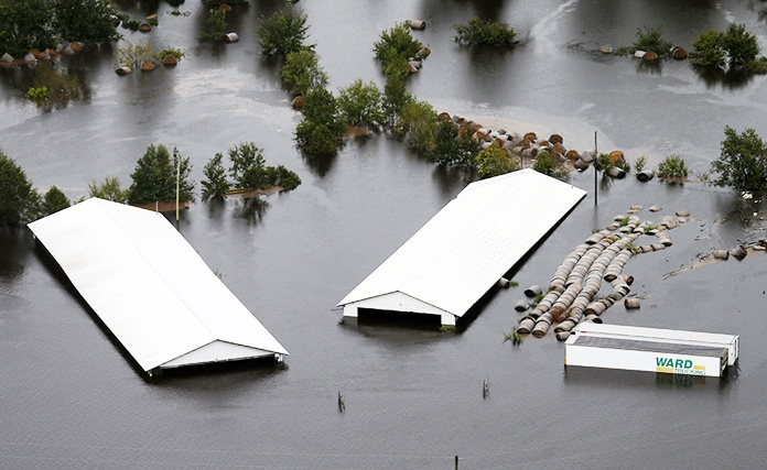 A hog farm is inundated with floodwaters from Hurricane Florence near Trenton, N.C., Sunday, Sept. 16. The industrial-scale farms contain vast pits of animal feces and urine that can pose a significant pollution threat if they are breached or inundated by floodwaters. (AP Photo/Steve Helber)
