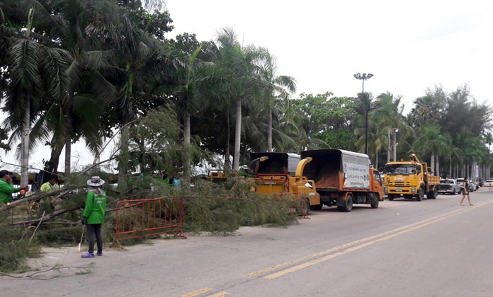 Work crews were out trimming tree branches in Jomtien Beach.