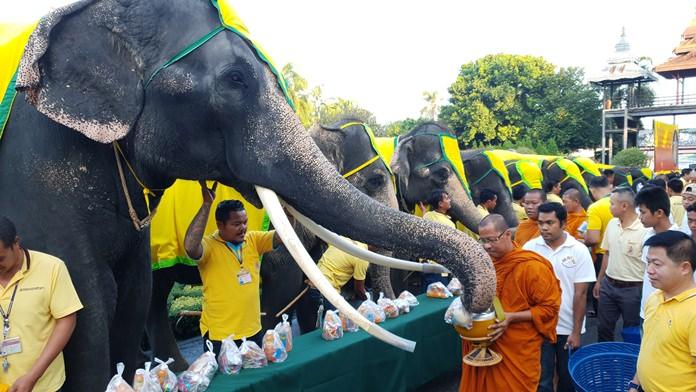 Nine elephants present offerings to Abbot Kaseamkittisophon and nine monks from Samakeebanpot Temple in Sattahip.