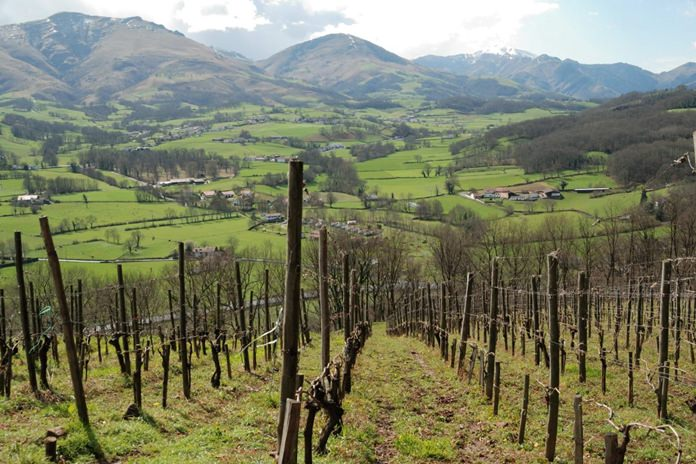 Vineyards in the Pyrenees.