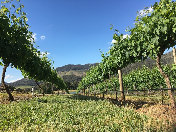 Australian vineyard.