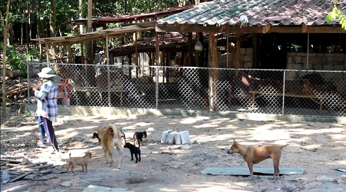 Nongprue has laid plans to build a shelter to house the sub-district's stray dogs, but has yet to figure out how to cover the food and care costs.