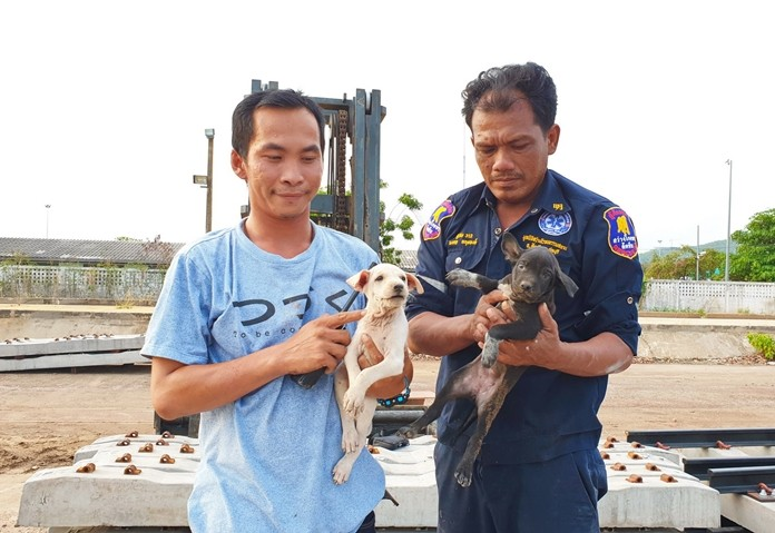 Sawang Rojana Thammasathan Foundation rescuers rescued two puppies from under a pile of railroad ties in Sattahip.